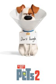 The Secret Life of Pets 2 2019 Dual Audio [Hindi-Eng] 1080p 720p Torrent Download